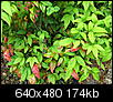 What plant is this?-may-anchor-point-219.jpg