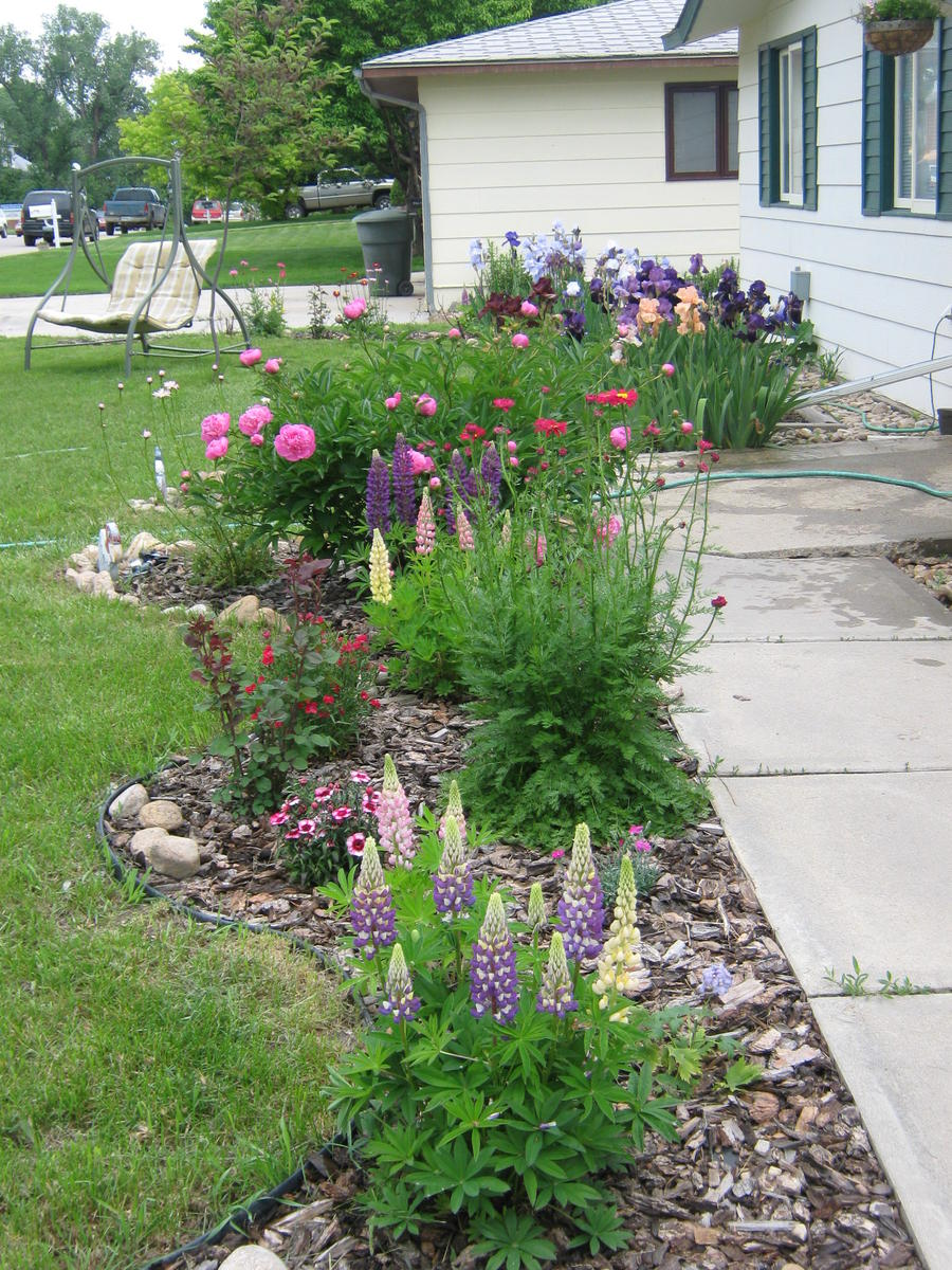 Here are pics of my flower beds flowers lawn growing for Backyard flower bed ideas