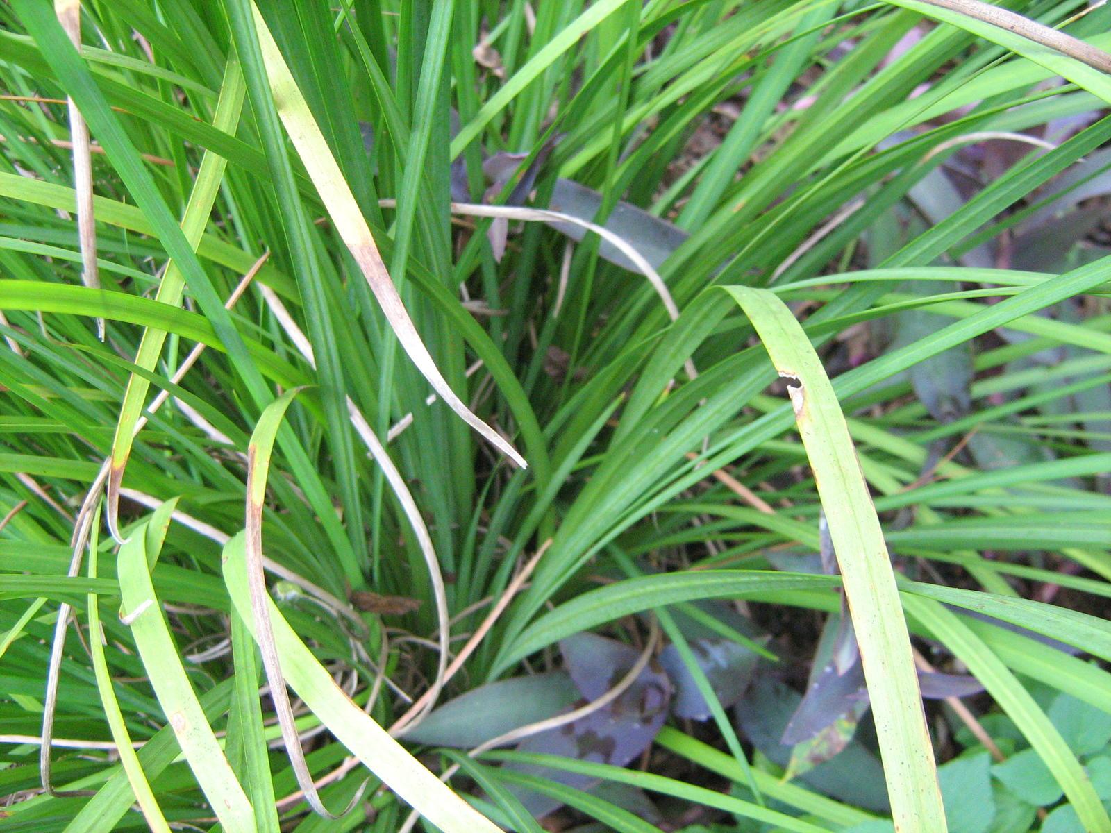 Help me identify this plant flower iris growing grass – Garden Plants Identification