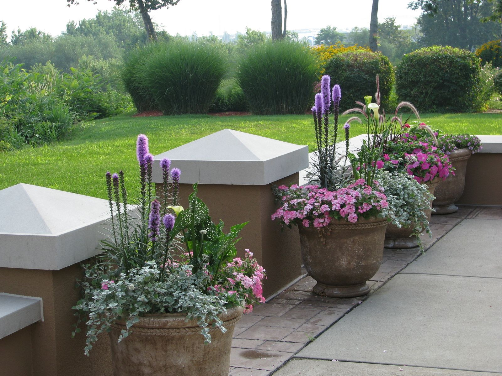 Ideas for a slope Landscaping grasses with purple flowers