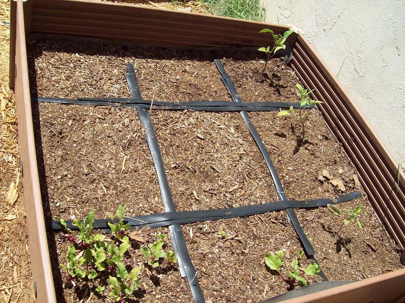 Square Foot Gardening Anyone  Square Foot Gardening Anyone growing plant  eating buy fall. Square Foot Gardening Forum