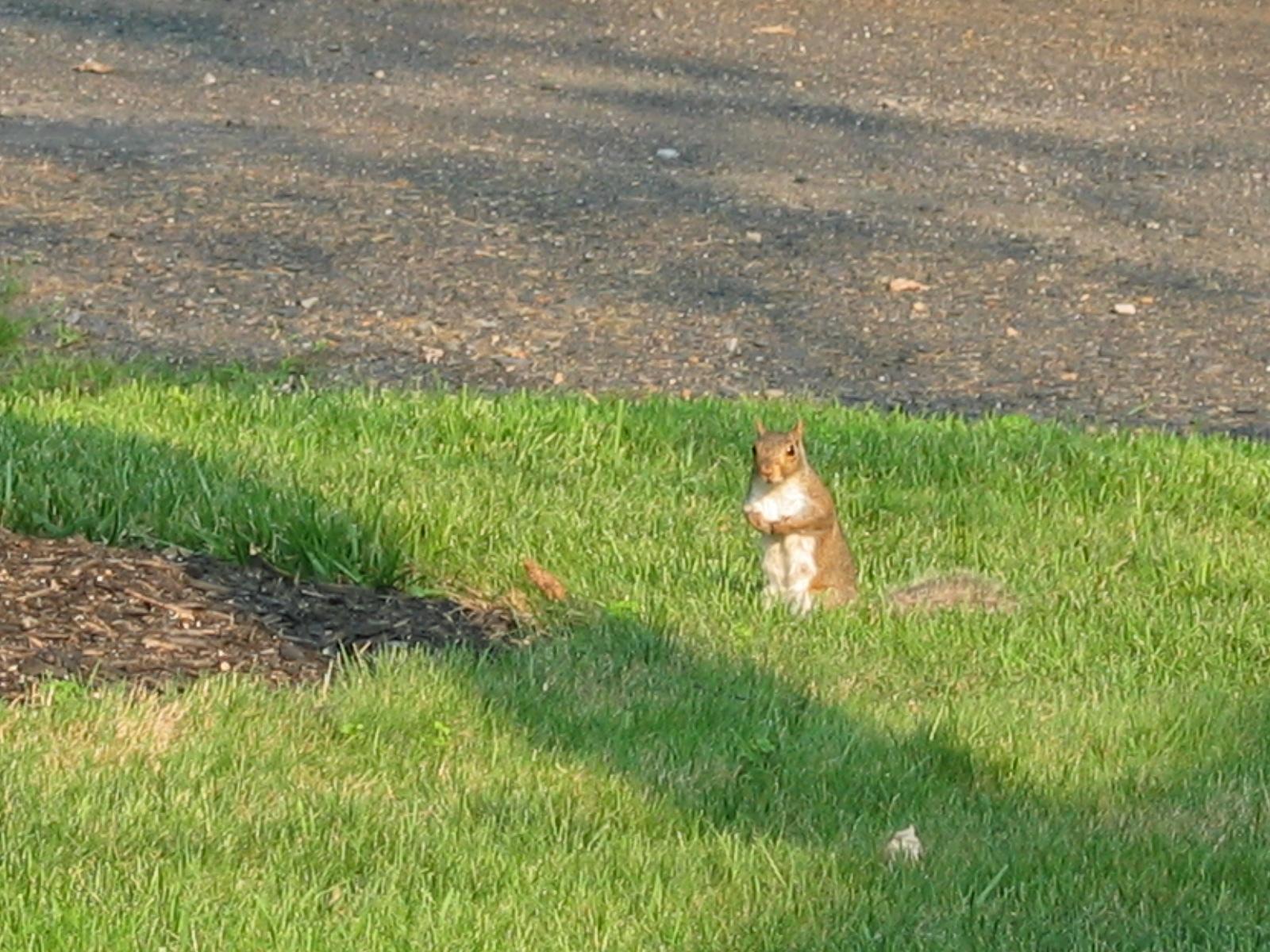 Squirrel Proof Bird Feeders Trees Back Yard Corn How