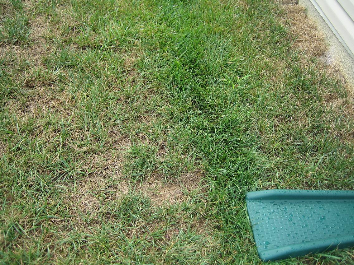 fungus on lawn grass worm watering cut garden trees