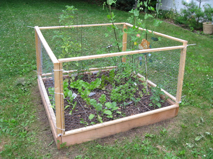 Square Foot Gardening  Anyone  35887 1408687469664 1606779201 984017 3959314 n jpg. Square Foot Gardening Anyone   new  beans  gardener  year    Trees