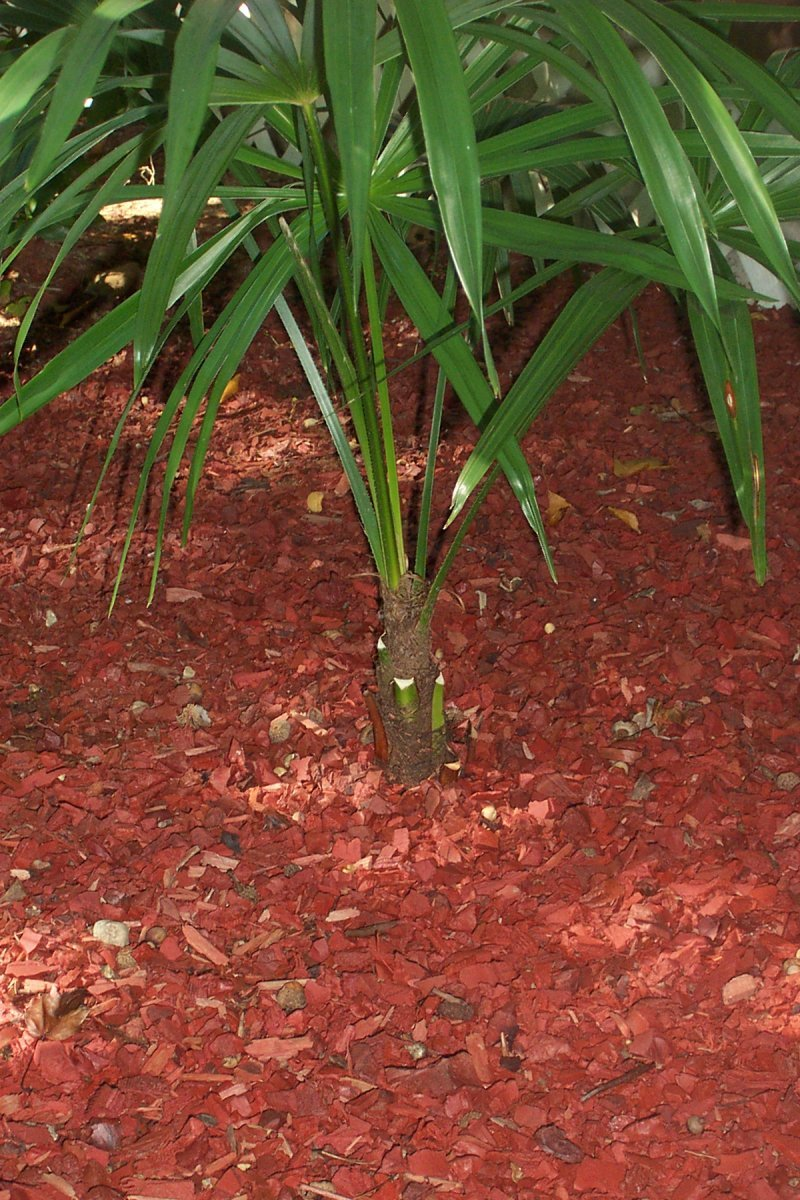 Tropical Garden in northern Zone 7 (growing, palms, trees, front ...