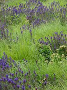 Please Id Flowers And Gr Sony Cybershot Eng Landscape Dsc Hx9v 45 1