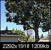Big tree - too close to the house?-img_6608.jpg