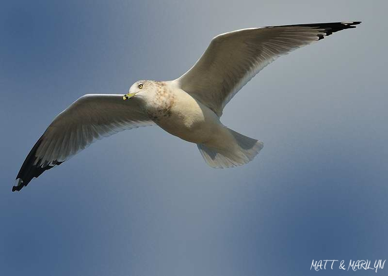 487297 Flying Birds