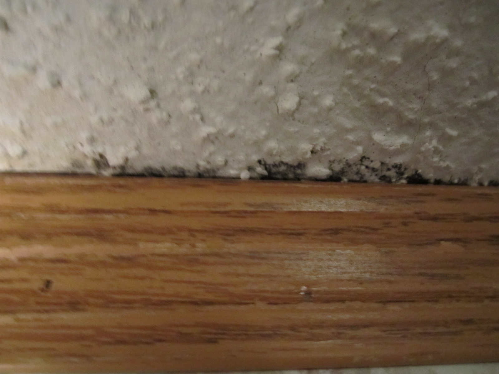 Does This Look Like Mold Floor Roofing Home Depot