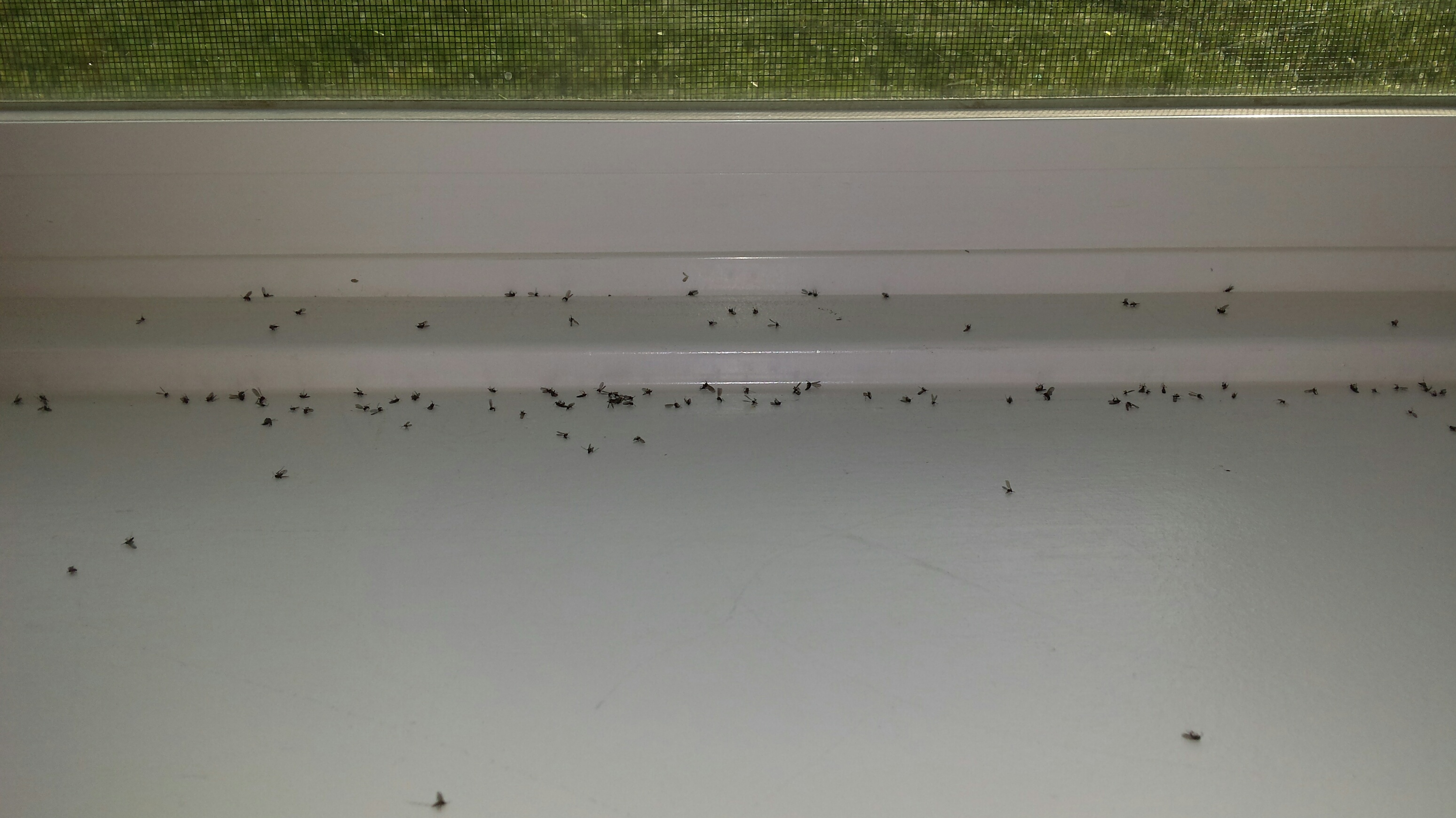 Awesome Bathroom Flies Exterior