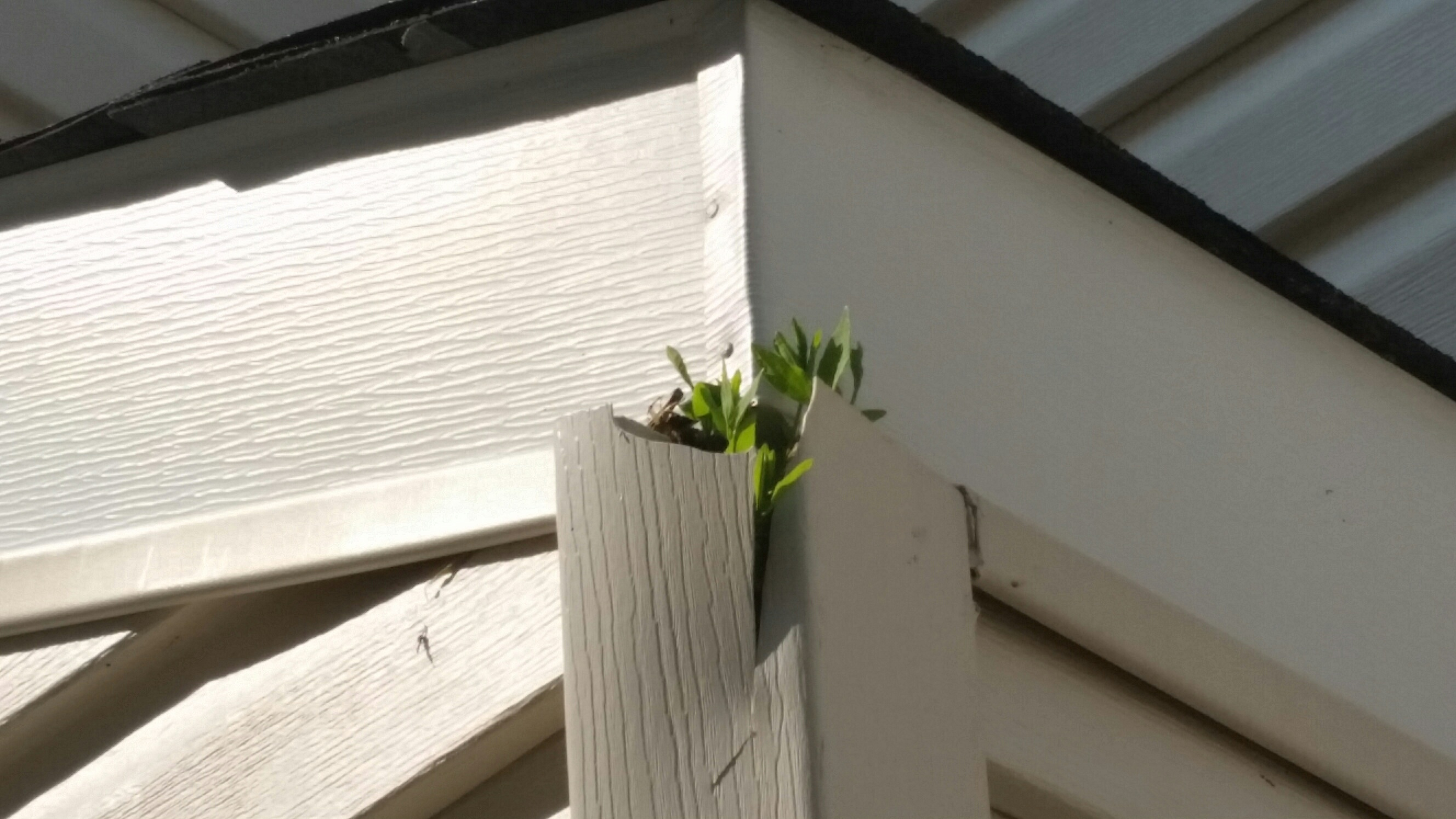 Need Help Killing Plant Growing In Vinyl Siding