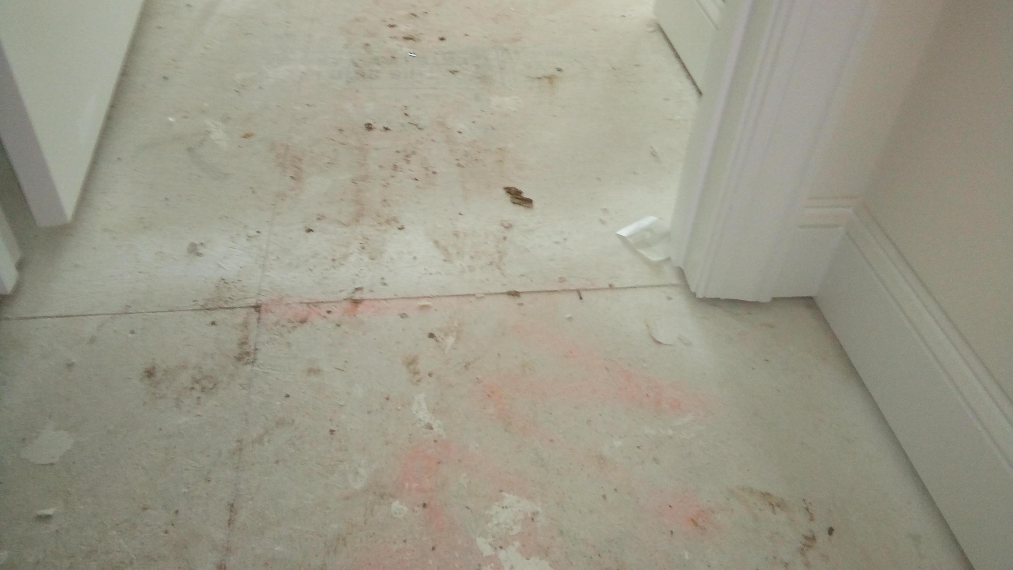 Type of screws needed to reinforce subfloor lowes for Squeaky bathroom floor