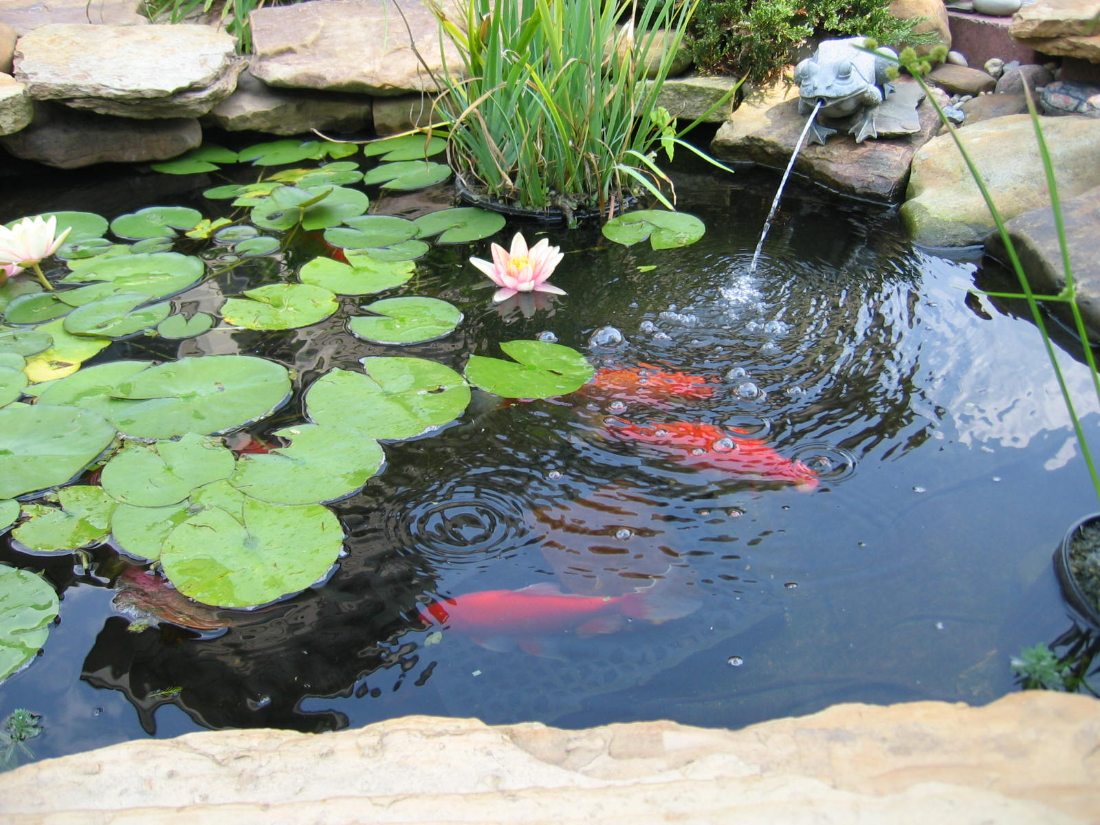 Backyard water feature window ac stove basement for Koi pond fish