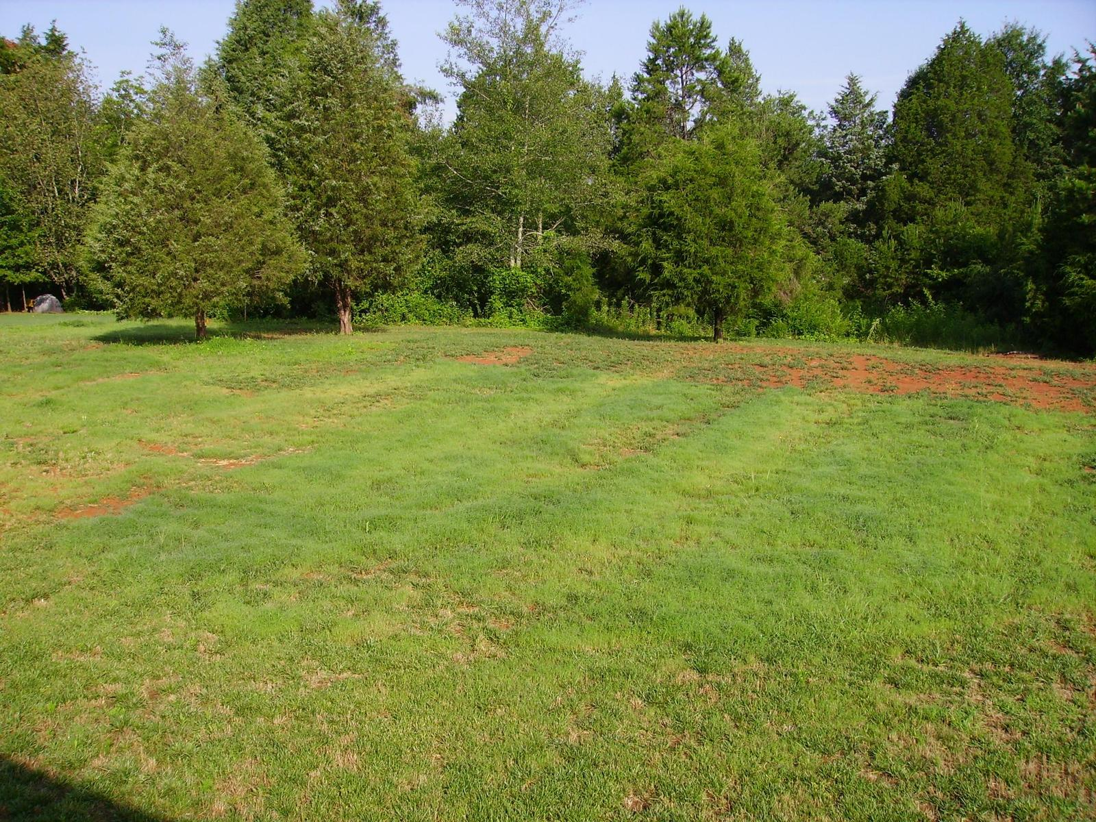 Need landscaping inspiration and or websites for ideas for Garden grass