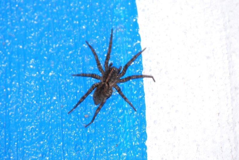 big aaaaaaa spider in the basement floor ceramic