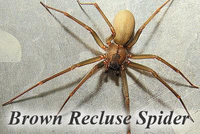 spider id help please houston texas tx page 2