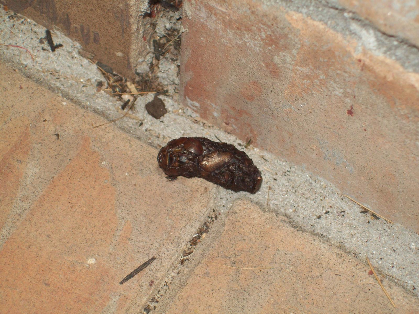 Can Anyone Identify What Animal Leaves These Droppings Garden Safe Houston Texas Tx