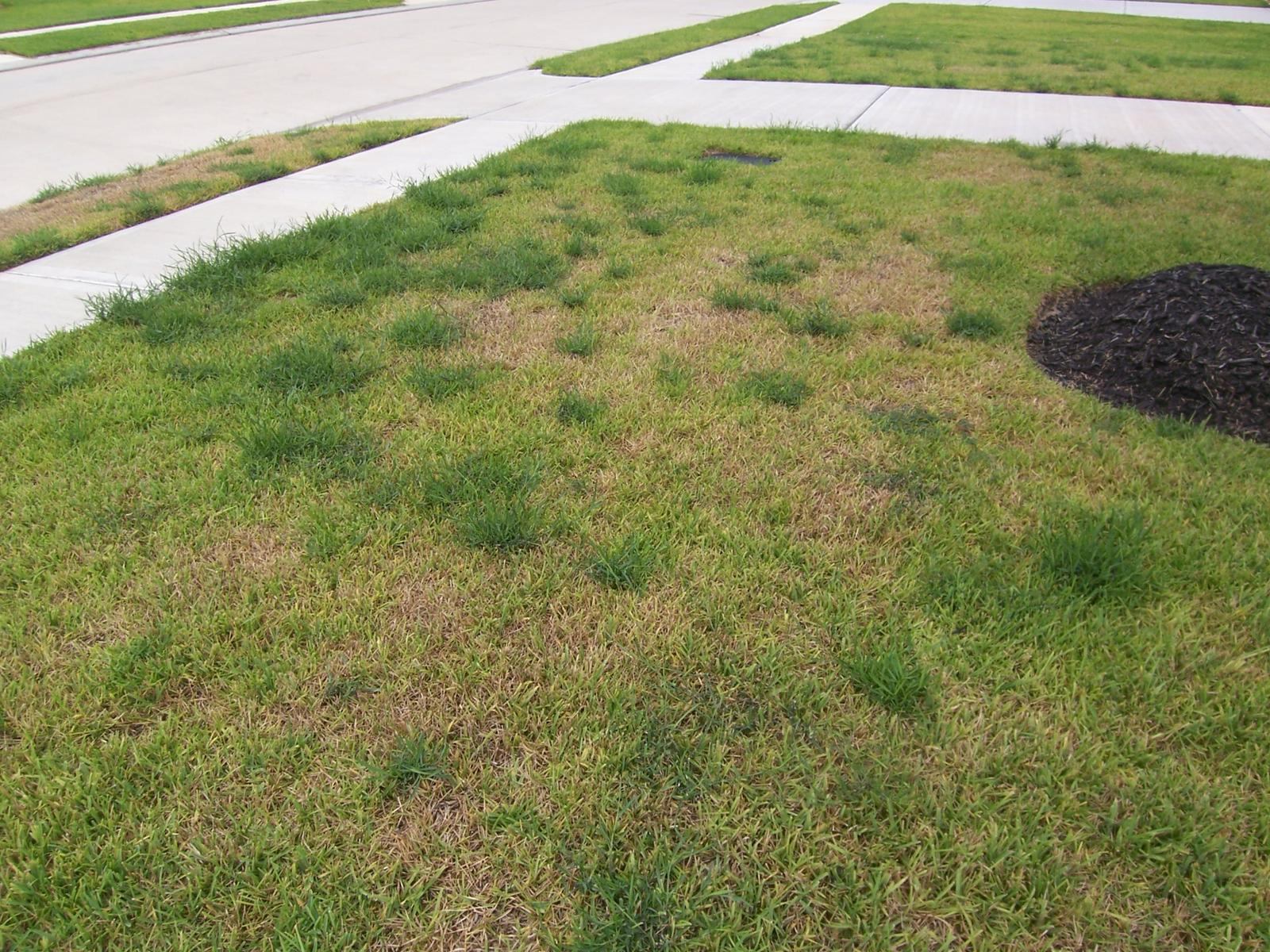 Any Houston Lawn Experts Spring Center HOA Home Depot to buy