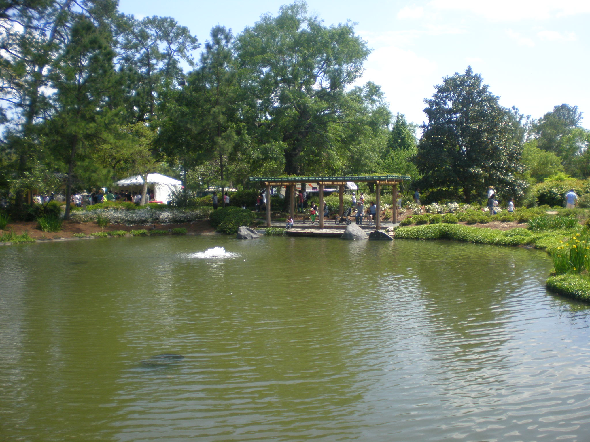 Japanese Gardens In Hermann Park Houston Portland
