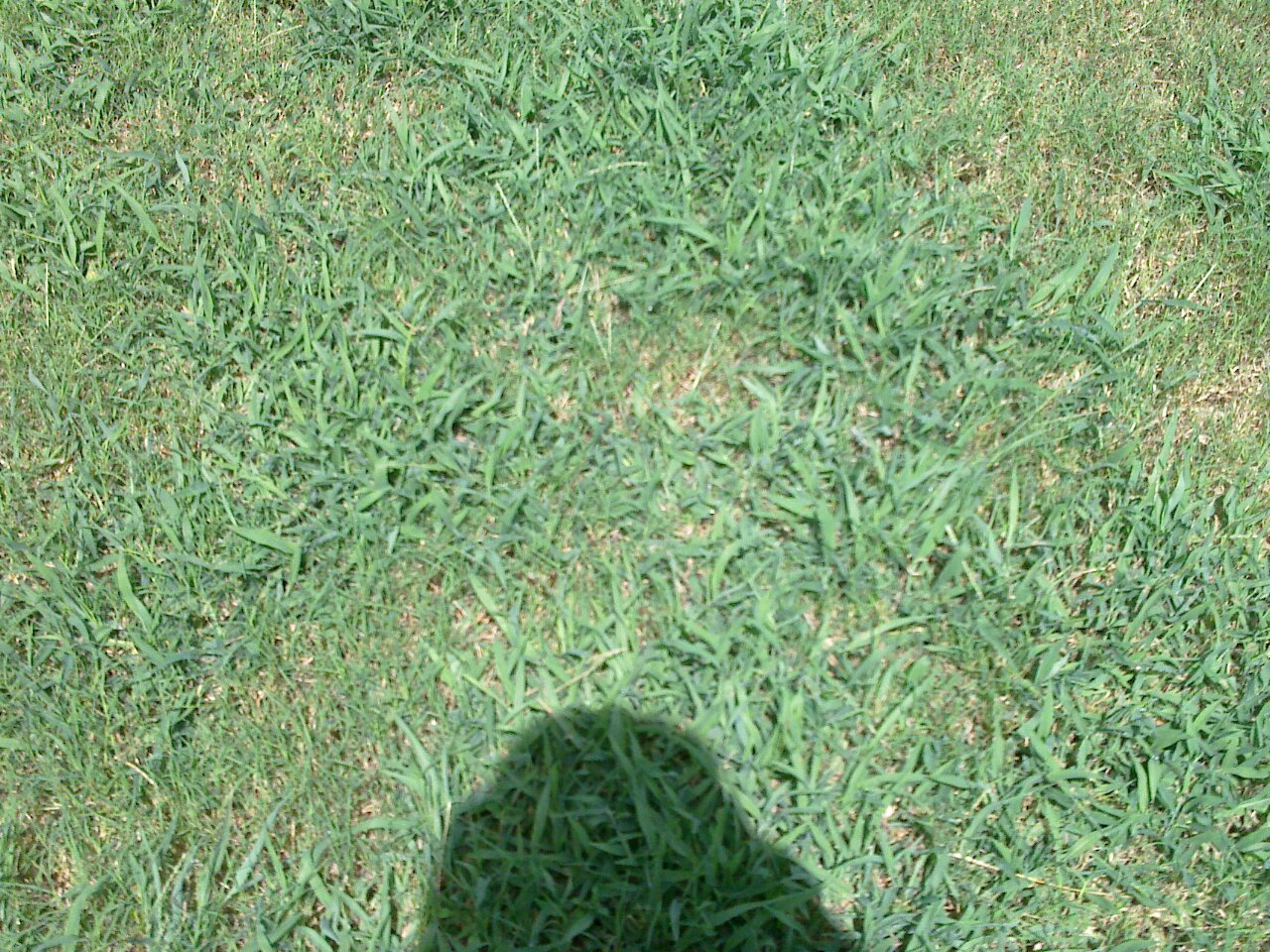 Types of lawn grass weeds - Weed Control For Bermuda Grass Lawn 20100808_001 Jpg