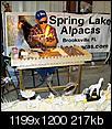 Sunshine State Alpaca Expo-a23.jpg