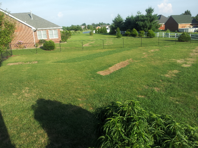 Does Septic System Need Attention House Neighborhood