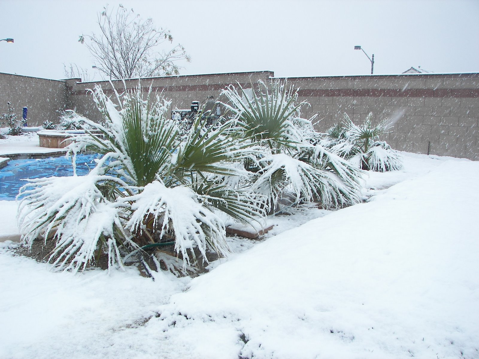 http://www.city-data.com/forum/attachments/las-vegas/64887d1278235091-does-las-vegas-ever-get-severe-snow.jpg