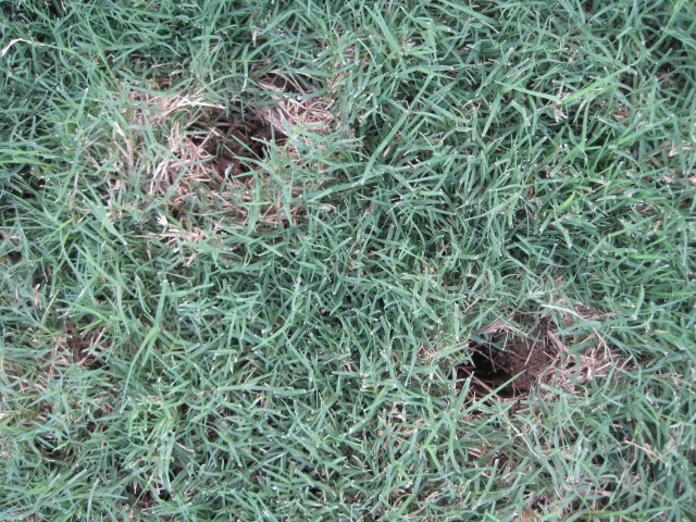How To Stop Moles From Digging Holes In My Yard Bug Bombs