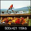 """Autumn """"Pictures"""" in Missouri-autumn-king.jpg"""