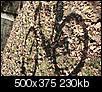 """Autumn """"Pictures"""" in Missouri-bike-shadow.jpg"""
