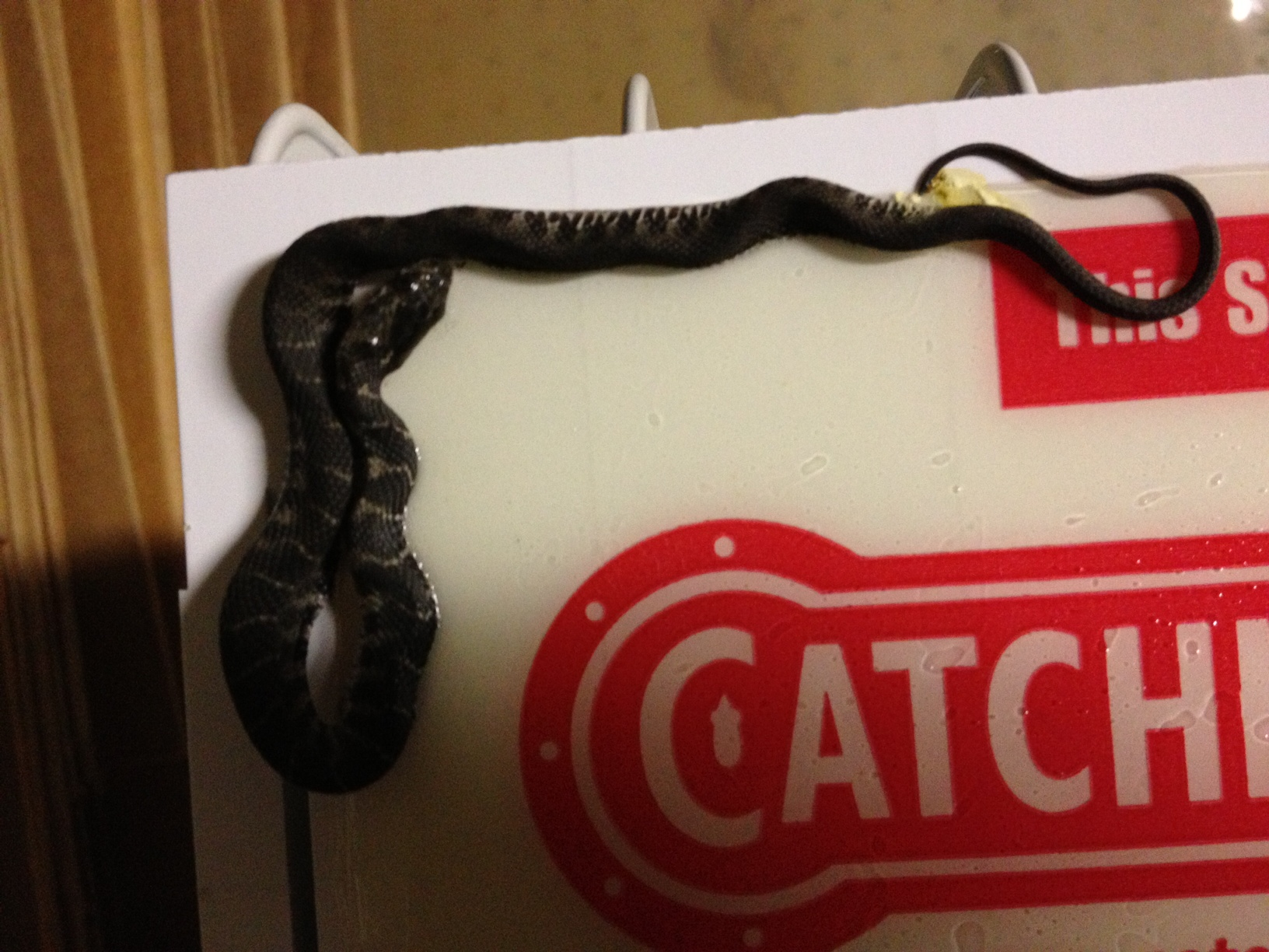 Found Small Snake in my basement Central Jersey Home Depot