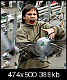 What do you hate most about NYC?-woman_attacked_by_pigeons.png