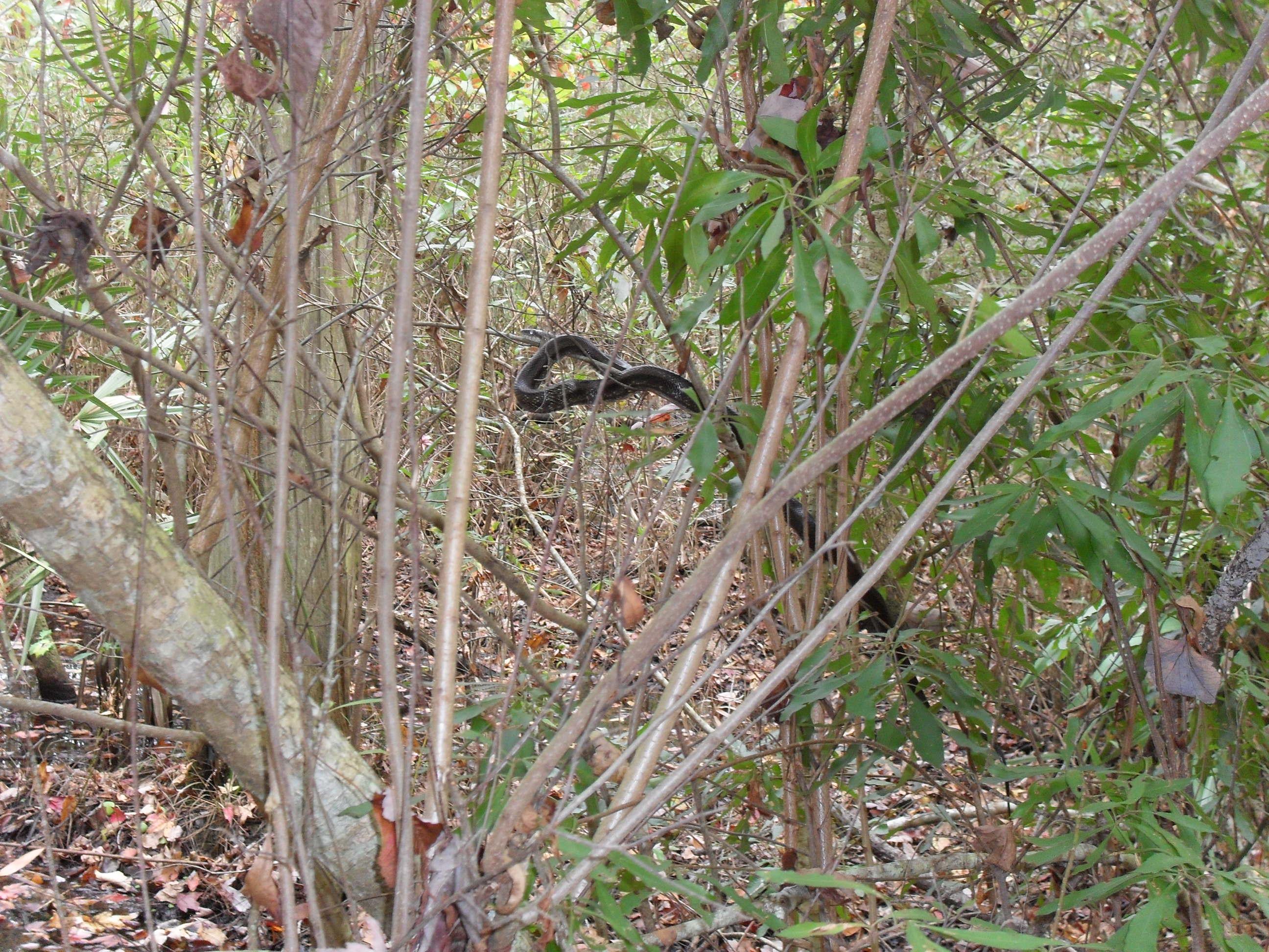 snakes in north carolina concord clayton maintenance garden
