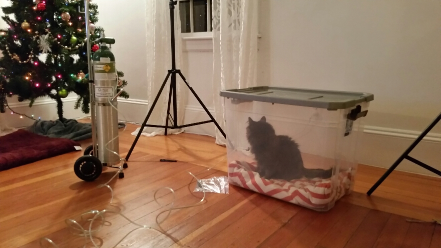 Animal Pet Store Tanks for Pinterest