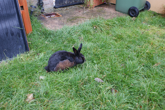 Rabbits fur color change rabbits bunnies bunny animals