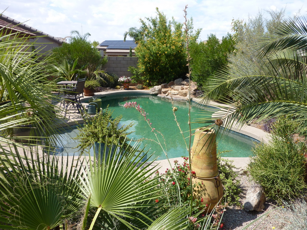 Trees Around A Pool Type Recommendations And Distance House Living Phoenix Area