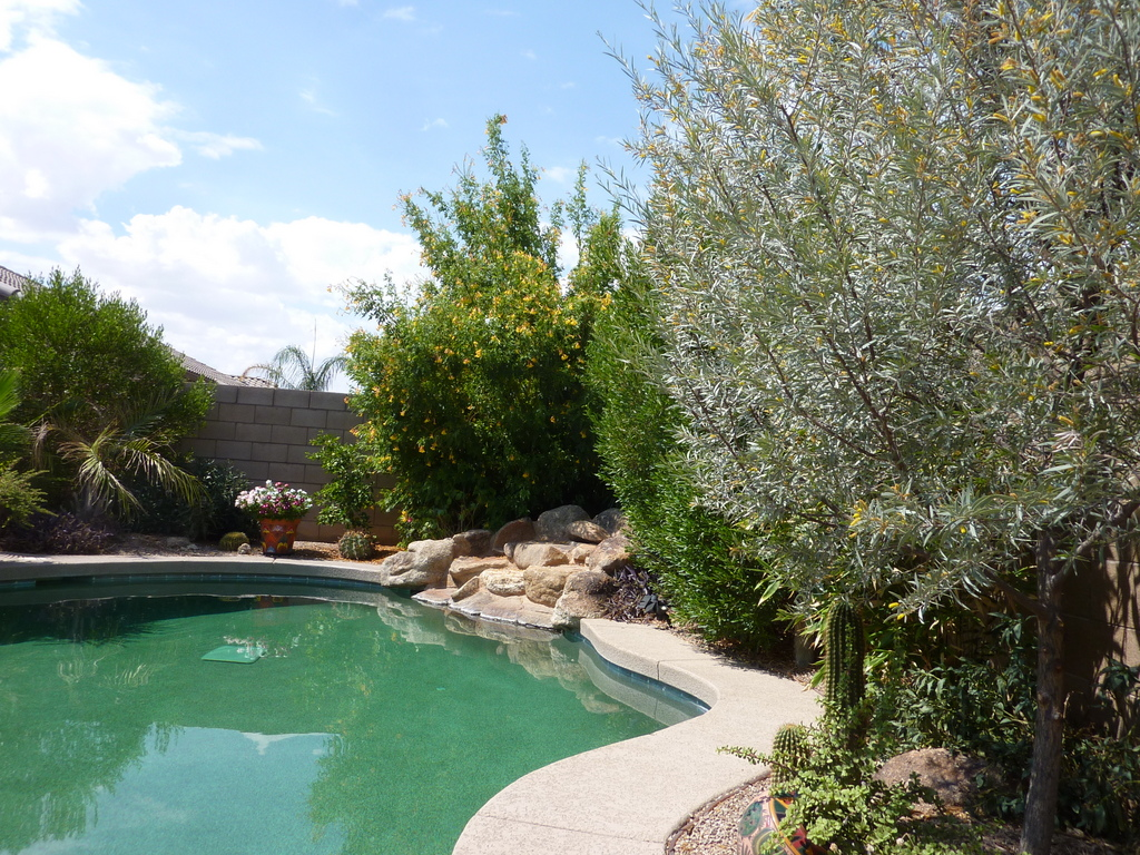 Trees Around A Pool Type Recommendations And Distance