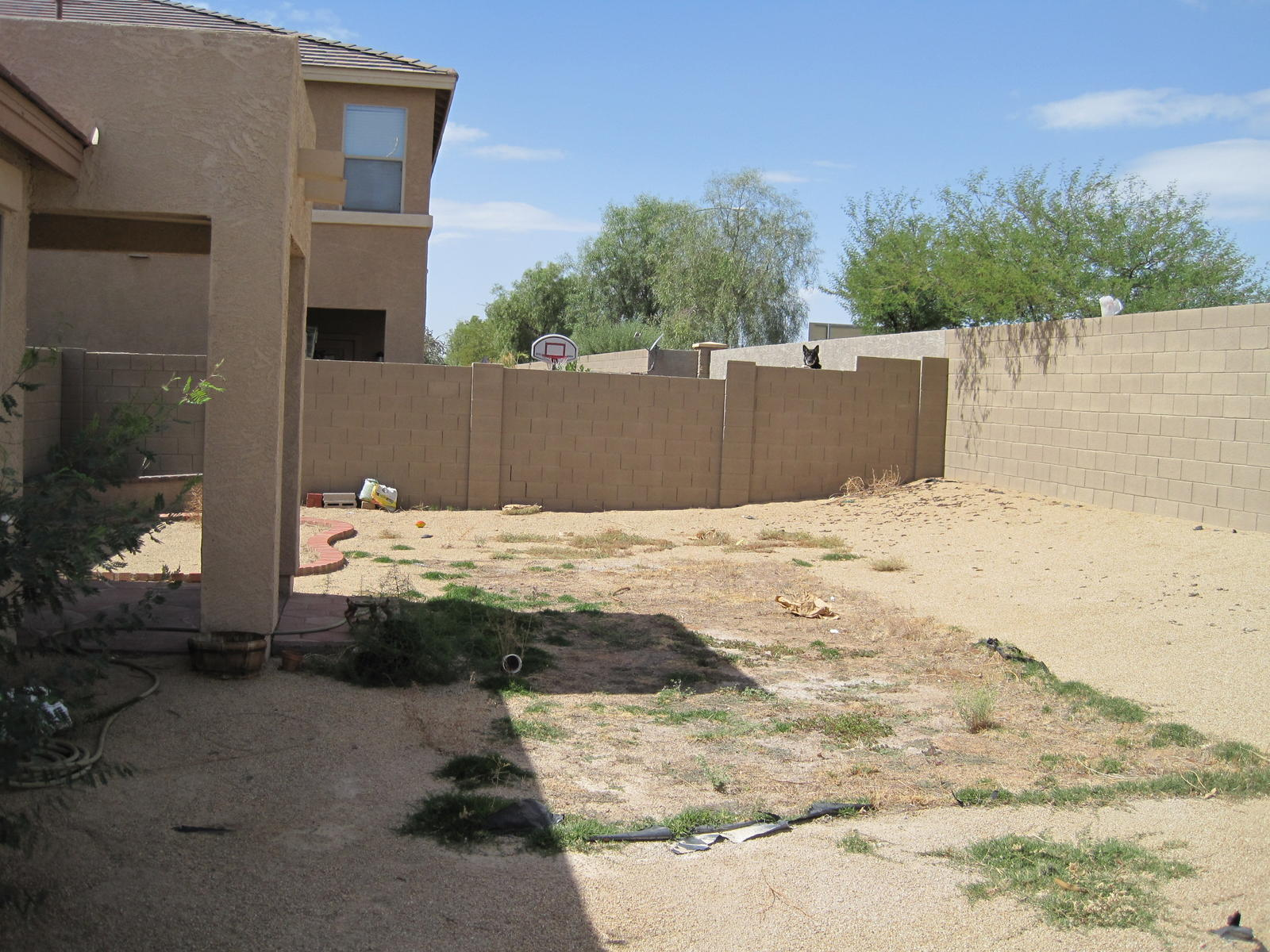 Whats would be the cheapest way to landscape this yard?