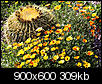 Bright Orange & Yellow Flowers - Weeds?-desert-flowers.jpg