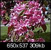 Flowers-crabapple.jpg