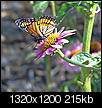Flowers-butterflyflower_edited-1.jpg