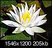 Flowers-lillypad_edited-1.jpg