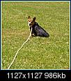 Doggy portraits.-hpim0757.jpg