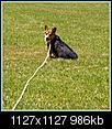 Doggy portraits.-hpim0757.jpg