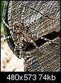 Wildlife-dscn1488.jpg