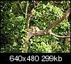 Wildlife-p1010015.jpg