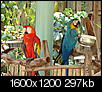 Show Me Some Birds!-dsc00519.jpg