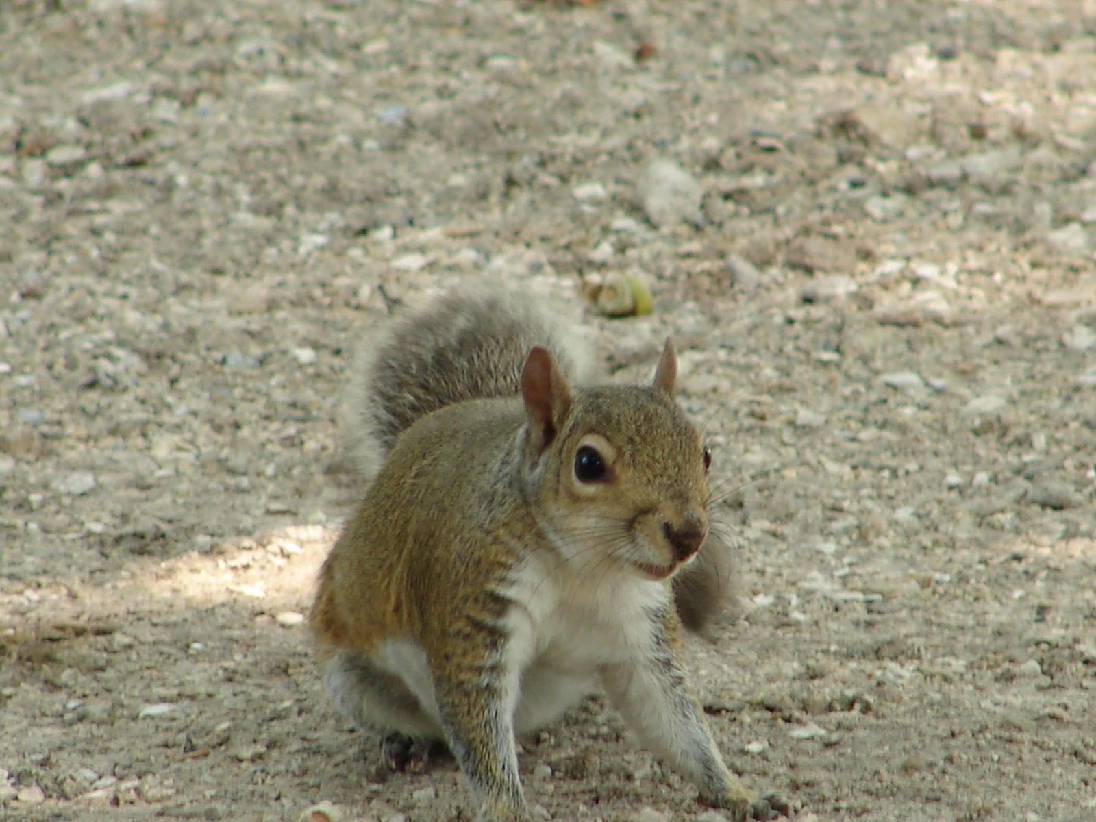 Cute squirrels in love - photo#8