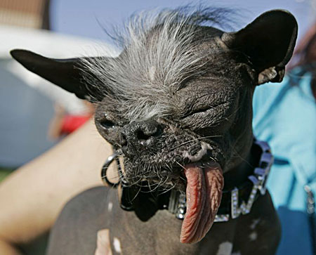 Ugliest  Pictures on Reported Dog Choice Is The Bane Of Dog Breeders  Ugly Dog 1  Jpg