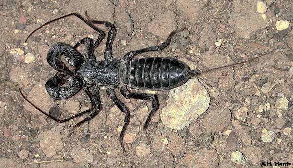 Preying mantis wasp wtf